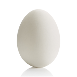 SEASONAL LARGE EGG/8 SPO
