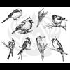 AVIARY - SMALL BIRDS/1 SPO