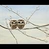 Pattern Pack - Owl Babies/1 SPO