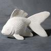KIDS Fancy Goldfish/2 SPO