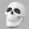 KIDS Skull/6 SPO