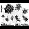 BOTANICAL -TREES/1 SPO