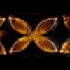 AVENTURINE - Pint (Cone 6 Glaze)
