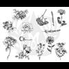 BOTANICAL - FLOWERS/1 SPO