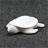 KIDS Little Baby Sea Turtle/6 SPO